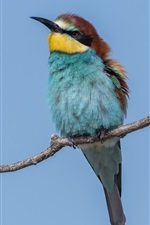 Preview iPhone wallpaper European bee-eater, blue sky