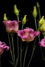 iPhone壁紙のプレビュー エキスパンダ、花束、ピンクの花、黒背景