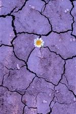 Flower, earth, ground, crack