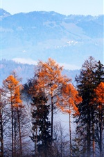 Preview iPhone wallpaper Forest, trees, mountains, fog, morning, autumn