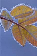 Preview iPhone wallpaper Frost, yellow leaves, cold