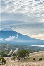 富士山、草、葦、雲、日本の風景