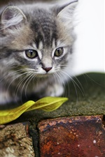 Preview iPhone wallpaper Furry kitten, leaf, bricks