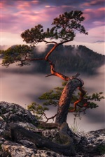 Preview iPhone wallpaper Germany, tree, morning, fog, mountains top