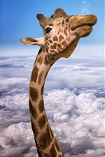 Preview iPhone wallpaper Giraffe head, eagles, height, clouds, sky, creative picture