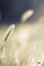Preview iPhone wallpaper Grass, bokeh, summer