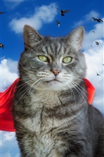 Preview iPhone wallpaper Gray cat, red cloak, pigeons, sky