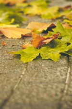 Preview iPhone wallpaper Green and yellow maple leaves on ground