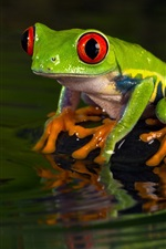 Preview iPhone wallpaper Green frog, water, wave
