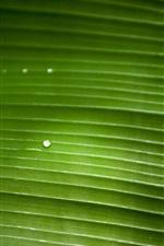 iPhone fondos de pantalla Macro fotografía de hoja verde, gotas de agua, textura