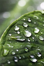 Preview iPhone wallpaper Green leaf, water drops, blur background