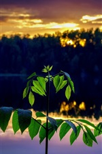 Preview iPhone wallpaper Green leaves, twigs, river, dusk