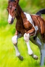 Horse running, green grass, speed