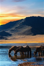 Preview iPhone wallpaper Horses drink water, lake, mountains, sunset