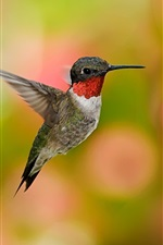 Preview iPhone wallpaper Hummingbird flight, wings, blurry background
