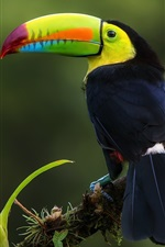 Preview iPhone wallpaper Iridescent Toucan, jungle, Costa Rica