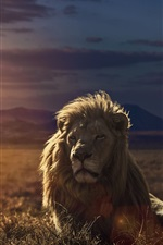 Preview iPhone wallpaper Lion at sunset
