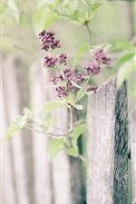 Preview iPhone wallpaper Little purple flowers, tree, fence, bokeh