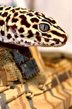 Preview iPhone wallpaper Lizard, spot, toy tank