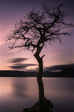 Preview iPhone wallpaper Lonely tree, lake, mountains, sunset
