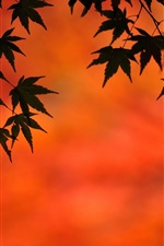 Preview iPhone wallpaper Maple leaves, autumn, dusk