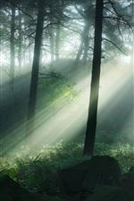 Preview iPhone wallpaper Matlock, UK, pinewoods, trees, sun rays