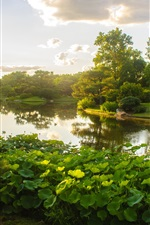 Preview iPhone wallpaper Missouri Botanical Garden, park, lake, lotus, trees, clouds, sun rays, USA