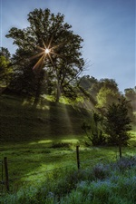Preview iPhone wallpaper Morning, sun rays, grass, trees, fields, fence, spring