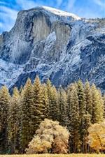 Mountain, trees, grass, autumn