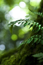 Preview iPhone wallpaper Nature, plants, green leaves, moss