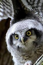 Preview iPhone wallpaper Owl, look, wings