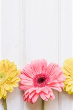 Preview iPhone wallpaper Pink and yellow chrysanthemum, white wood background