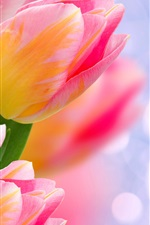 Preview iPhone wallpaper Pink tulips, flowers, bokeh, glare