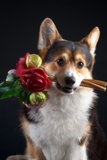 Puppy catch flowers