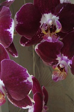 Preview iPhone wallpaper Purple orchid, flowers