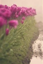 Preview iPhone wallpaper Purple tulips, flowers field, water, channel