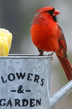 Preview iPhone wallpaper Red cardinal bird, kettle, yellow tulips