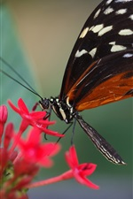 Preview iPhone wallpaper Red flowers, butterfly, insect