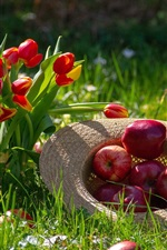 Preview iPhone wallpaper Red tulips and red apples, hat, grass