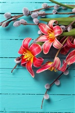 Preview iPhone wallpaper Red tulips, blue wood board