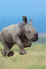 Preview iPhone wallpaper Rhino cub running in the grass