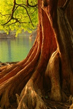 Preview iPhone wallpaper Roots, trees, river
