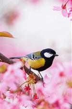 Preview iPhone wallpaper Sakura, pink flowers, bird, tit, spring