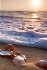 Mar, praia, conchas, ondas, espuma