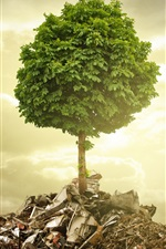 Preview iPhone wallpaper Single tree, garbage, wreckage