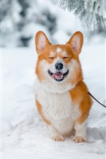 Preview iPhone wallpaper Smile dog, snow, winter