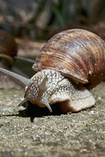 Preview iPhone wallpaper Snails walk on ground, insect