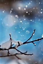 Snowy, winter, snowflakes, twigs, blue background