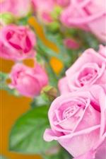 Algumas rosas cor de rosa, fundo laranja