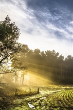 Preview iPhone wallpaper Spring, fields, trees, sun rays, morning